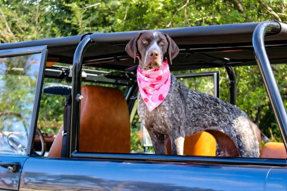 normas para viajar con tu perro en coche