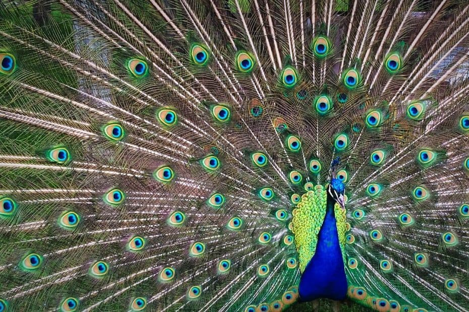 que es el turismo ornitologico