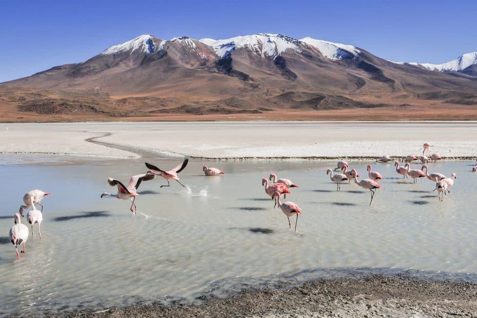 se podra viajar a bolivia en 2020 y 2021