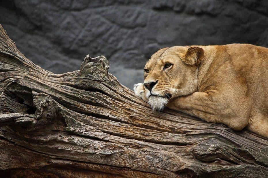 precio entrada fort worth zoo