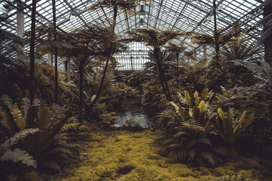 Precio Entradas Real Jardín Botánico de Madrid