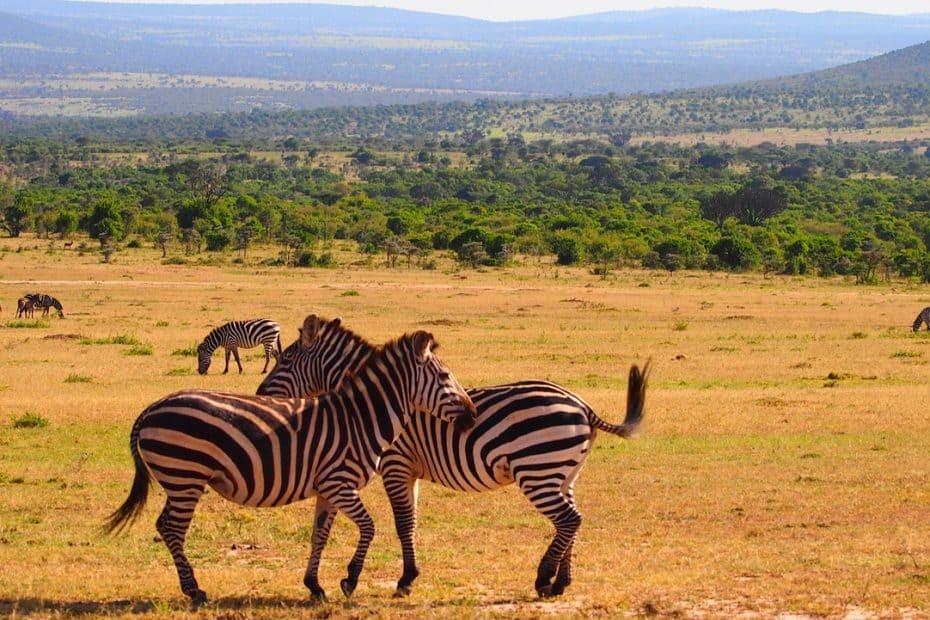 cual es la mejor epoca para viajar a kenya