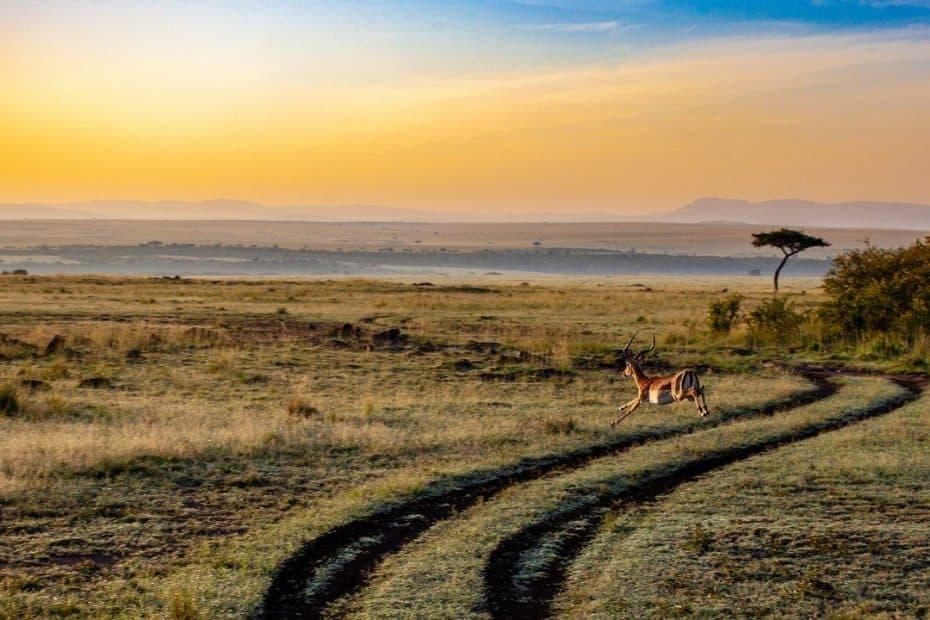 vacunas para viajar a kenia