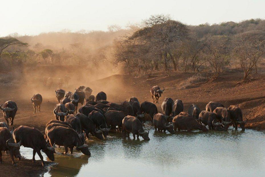 vacunas para viajar a sudafrica