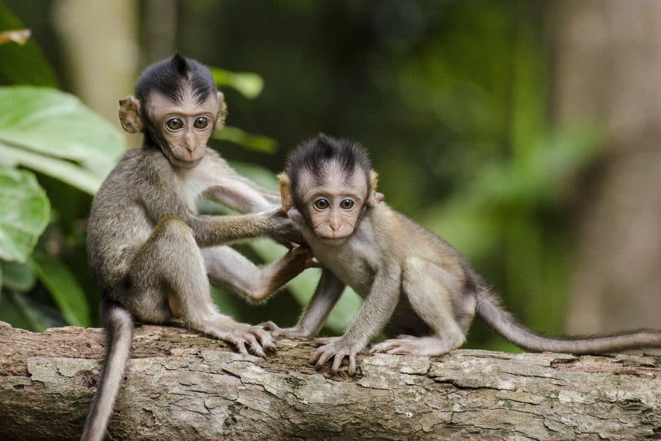 Precio Entradas Monkey Park de Tenerife