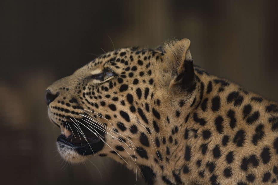Precio Entradas Parque Safari Dubai
