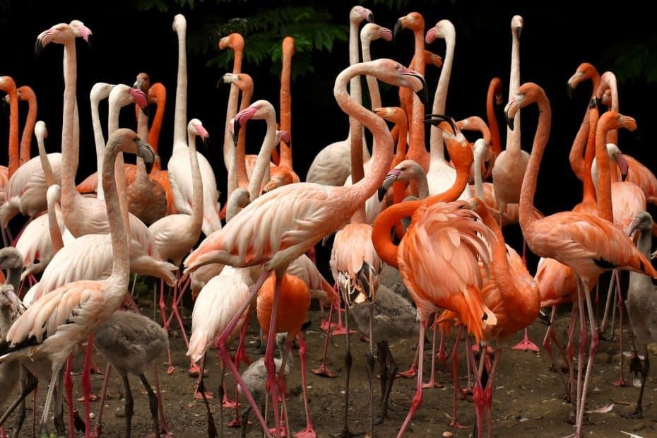 Precio Entradas Flamingo Gardens