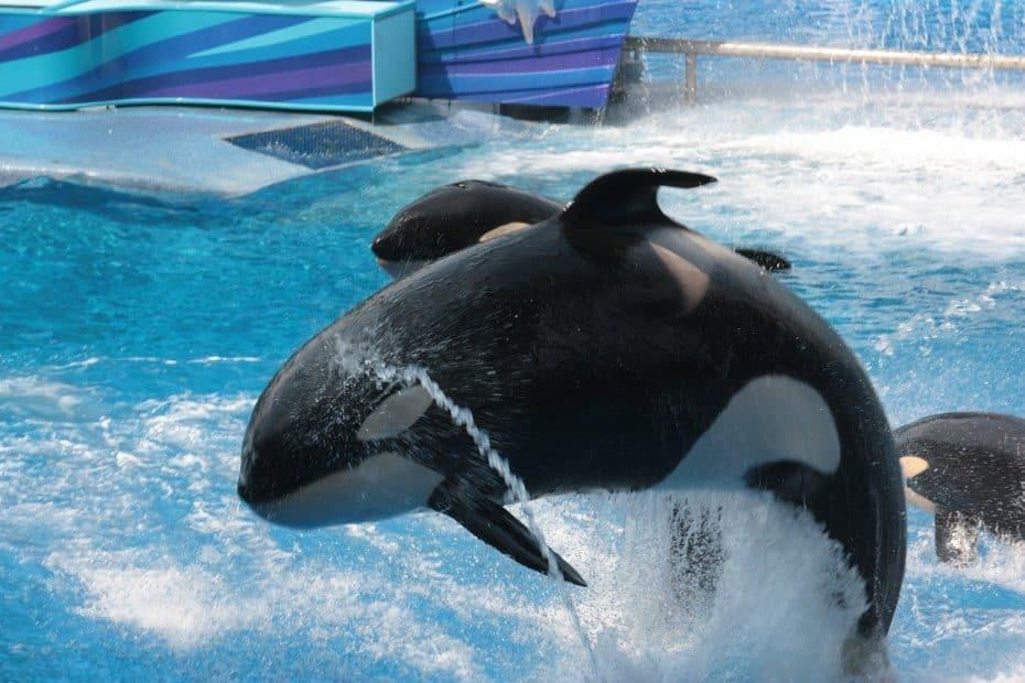 Precio Entradas SeaWorld Orlando