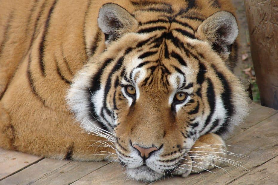 Precio Entradas Zoo de Guadalajara