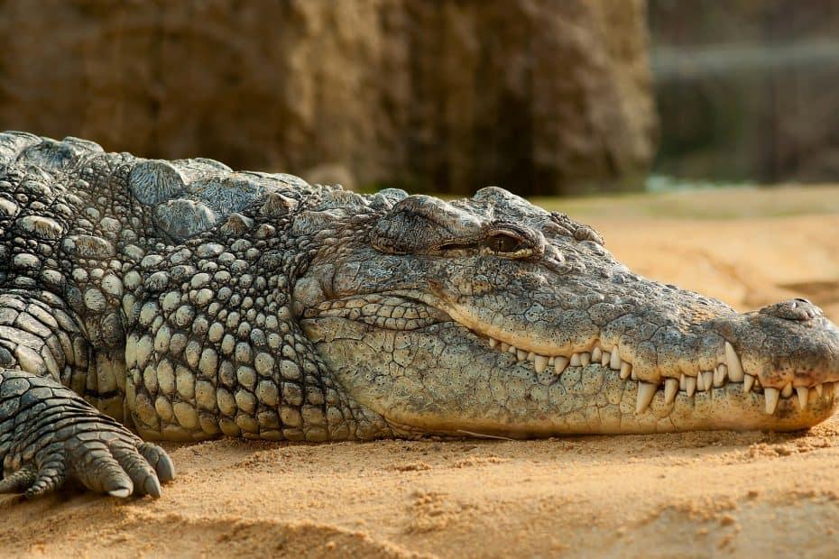 Precio Entradas Crocodile Park Torremolinos