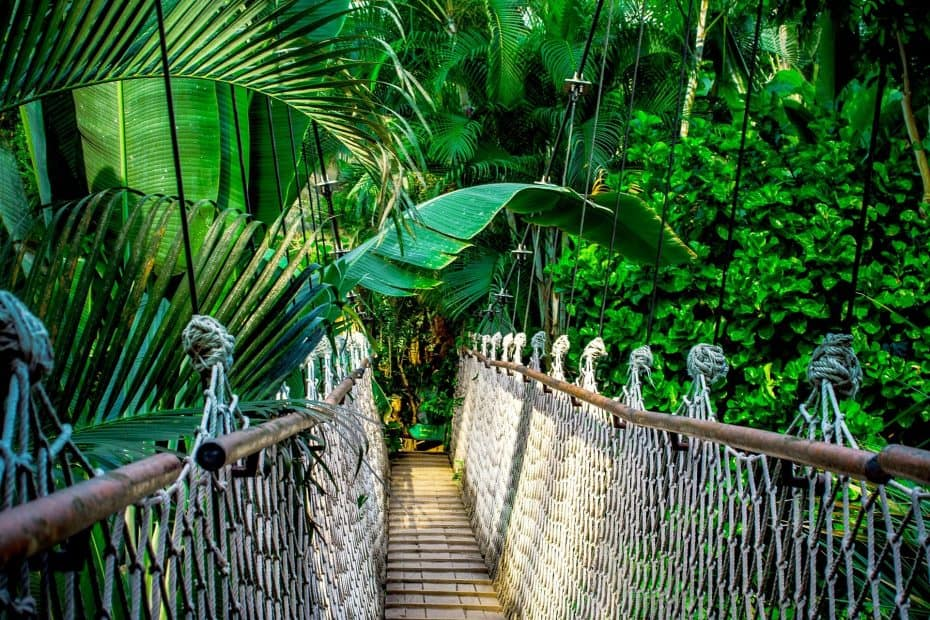 Precio Entradas Mistico Arenal Hanging Bridges Park